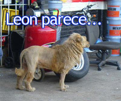 leon mejicano
