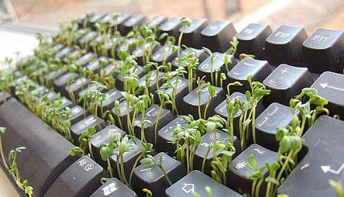 teclado-plantacion